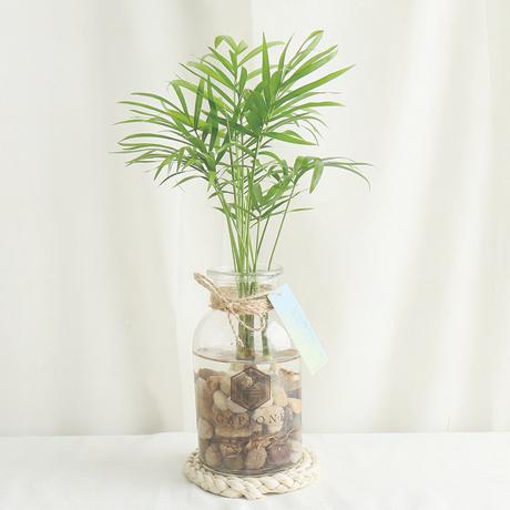갑조네 공기정화식물 수경재배 DIY 세트 실내공기정화식물, 1.테이블야자+유리병+조약돌(350g)+마끈(170cm)+투명스티커+행택+안내문+서비스
