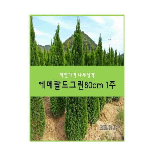 착한가격 나무생각 에메랄드그린80cm