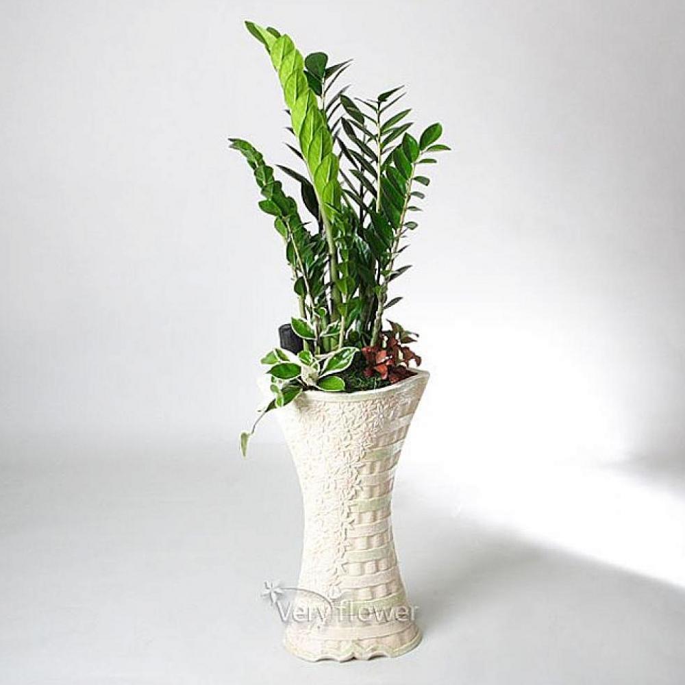 나비주 신화 금전수 중급 개업선물 기념일 꽃배달 꽃선물 생화 나무화분
