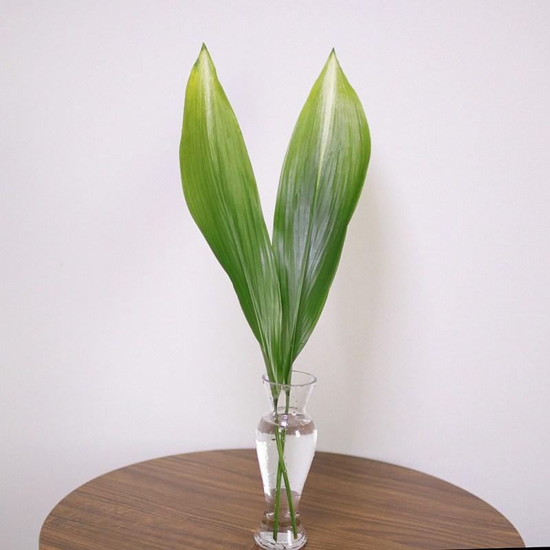 스위트피부티크 루스커스 몬스테라 야자수잎 엽란 그린테리어 수경식물, 엽란(2대)