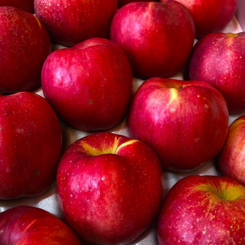 매일 경매로 신선한 과일 프리미엄 특등급 명절 과일선물세트 5kg 14과 보은 속리산 홍로 사과, 17과