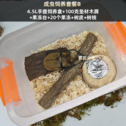 해외 장수풍뎅이 애벌레 사육장 도마뱀 달팽이키우기 코코넛크랩 애견 딱정벌레 성충용품 곤충 키우기-32383, 05.성충사육패키지E