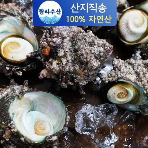 [산지직송] 해녀가 채취한 통영 뿔소라, 2kg