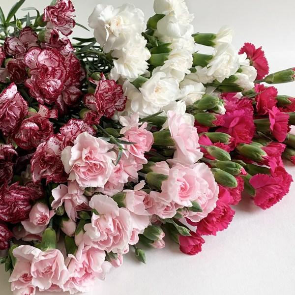 몬드플라워 스프레이 카네이션 1단 레드 연핑크 화이트 레드핑크믹스 생화 꽃꽃이 인테리어 꽃 배달