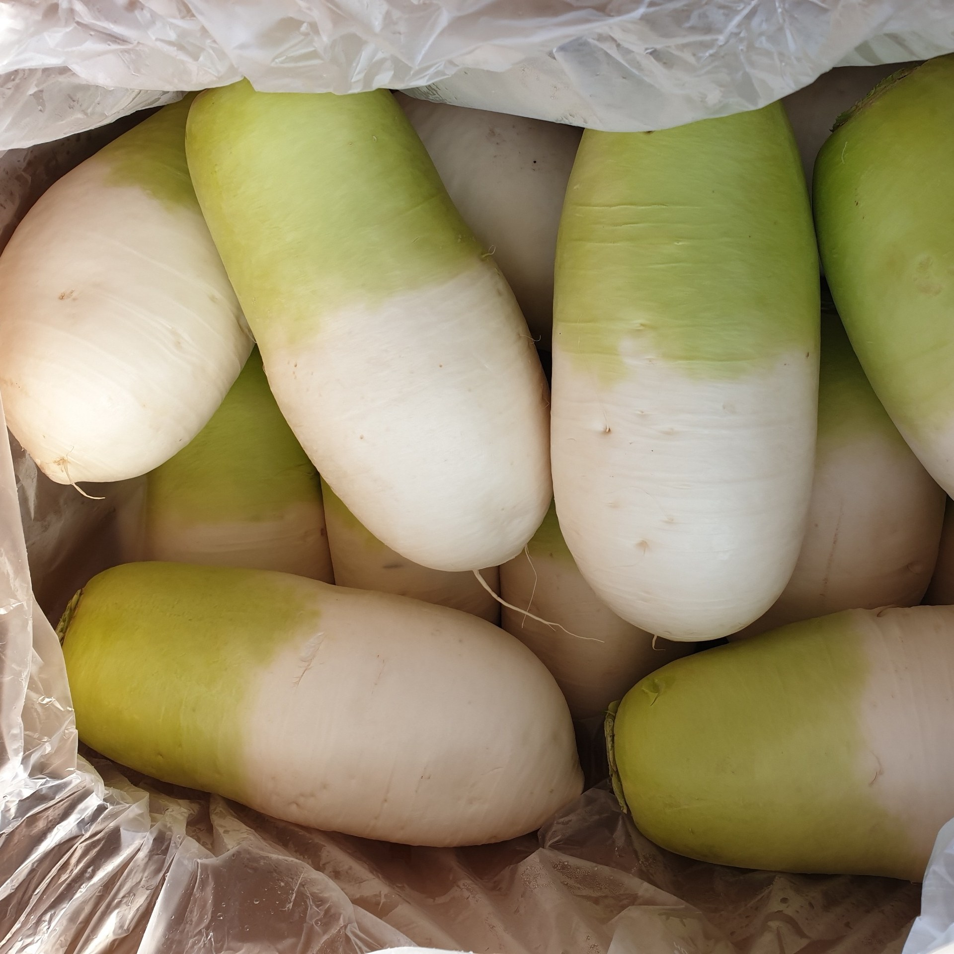 영호네농산물 제주도 월동무 무우 김장무 10kg, 1box
