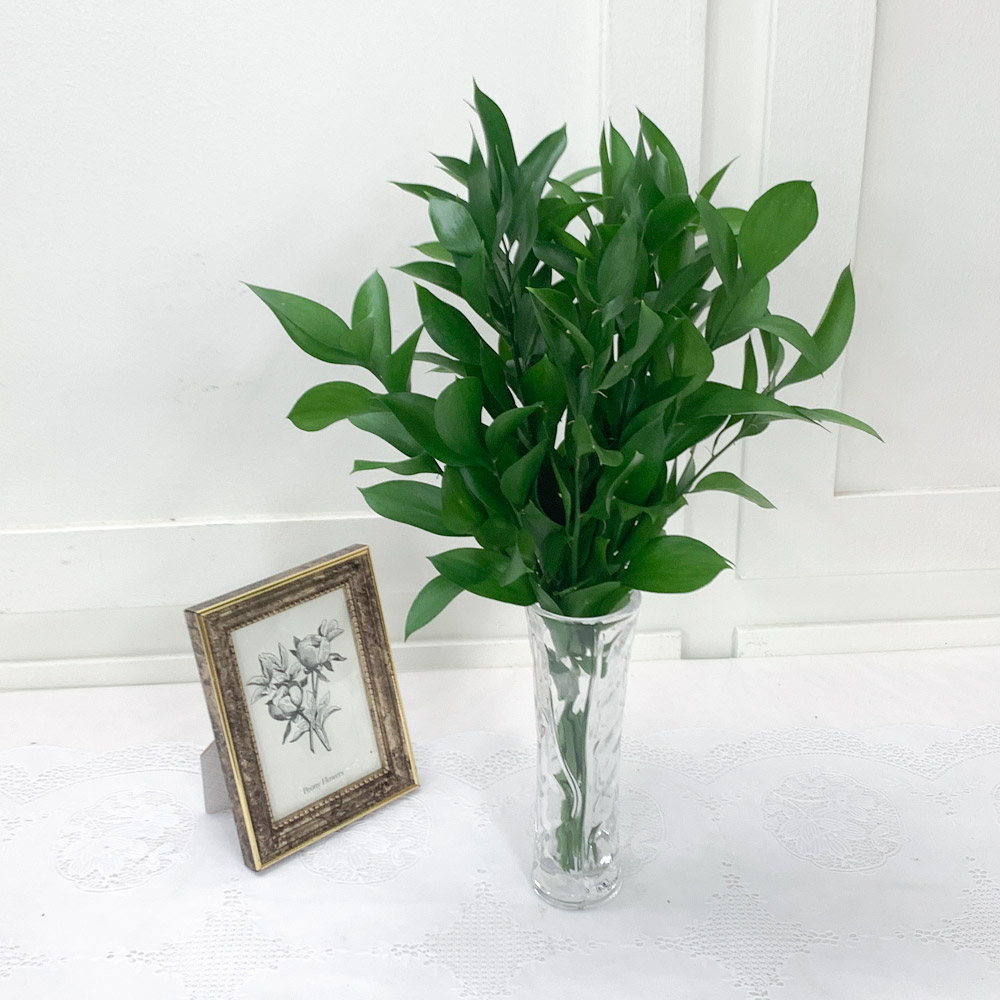 플플 수경재배식물 루스커스 (반단), 01_루스커스 (반단)