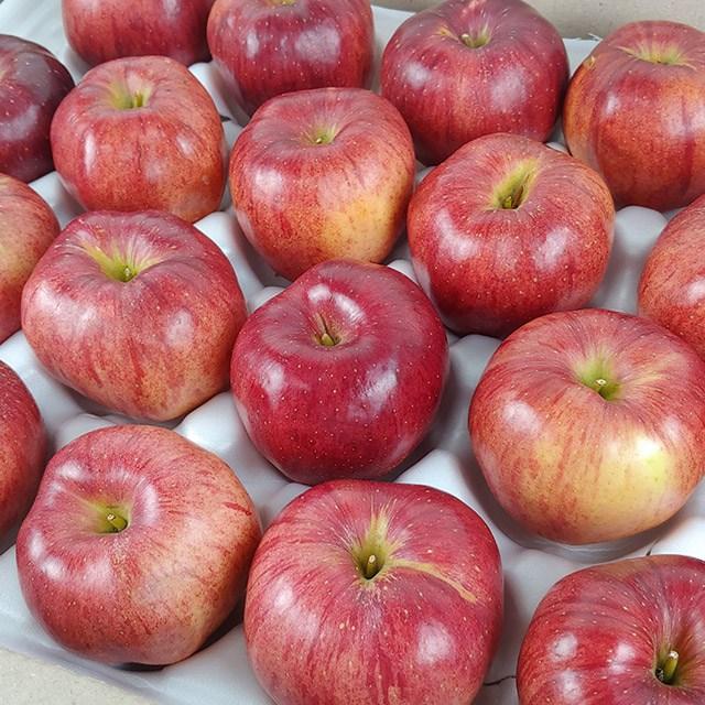 경북 햇 홍로 사과 가정용 10kg, 1박스, 경북 햇 홍로 사과 가정용 10kg 39-43과