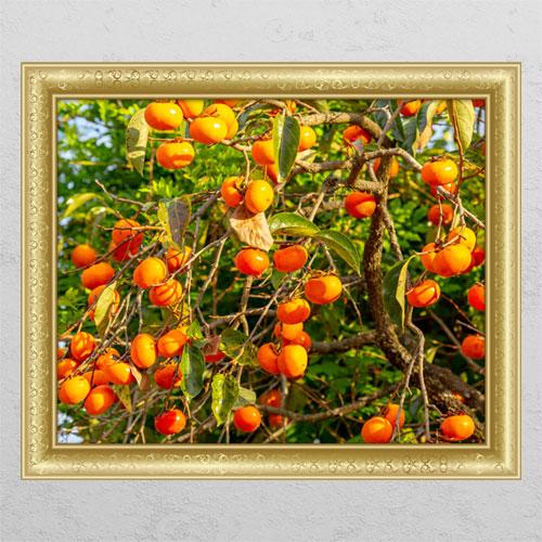 tl073-풍요로운재물의감나무1_창문그림액자, A타입내부창문형