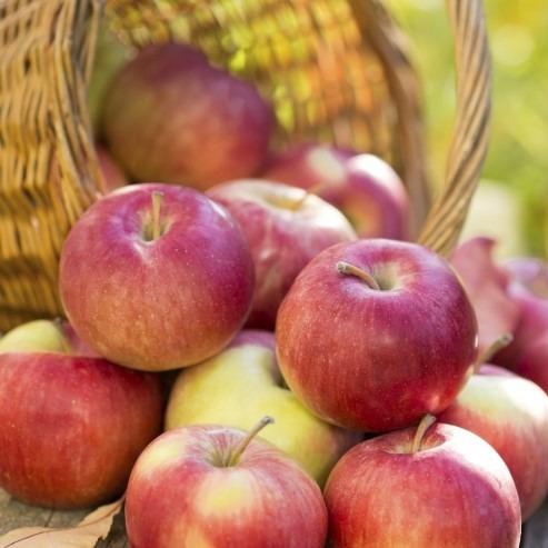[도담농장] 고당도 청송 햇사과 가정용흠과 2kg 5kg 10kg, 1box, [도담_01] 가정용흠과 2kg / 소과