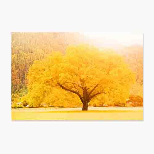 풍수아트 돈들어오는 그림 거실 현관 풍수 인테리어 액자 돈나무 4종, 3.금빛돈나무
