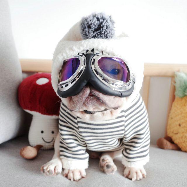 HS 강아지양털후리스 프렌치불독옷 겨울옷 후드티, 네이비