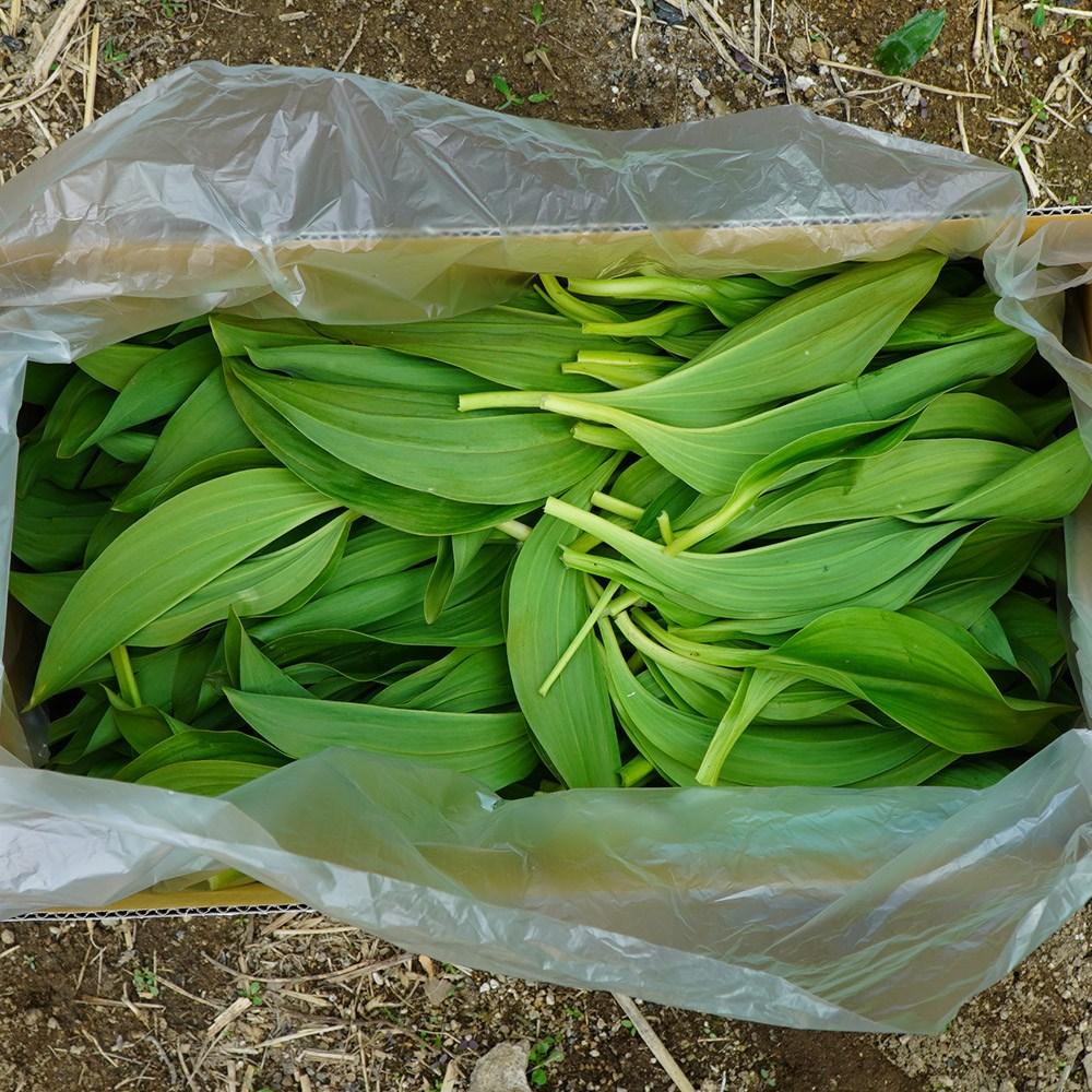 파머대디 울릉도 종 부드러운 잎명이 명이나물 1kg 2kg 강원도 산마늘 생명이나물 명의나물, 1box