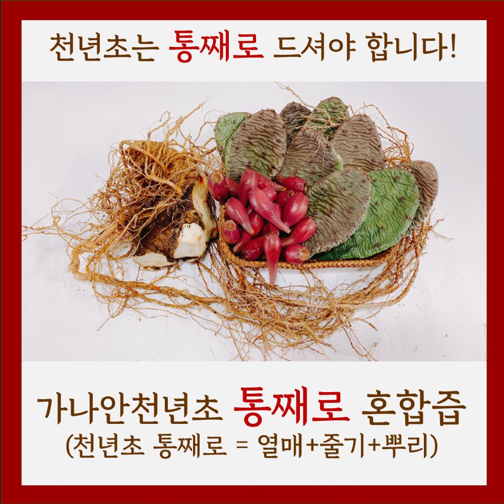가나안천년초 [천년초 진액]천년초즙(열매+줄기+뿌리), 120ml, 60개