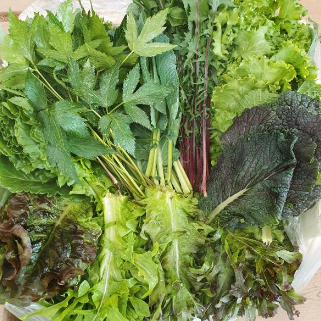 이순례농장) 당일수확 산지직송/모듬쌈&샐러드채소혼합1.2kg!! (기본쌈채소+샐러드채소+통포기채소 2-3종 유러피안식 샐러드채소 그외 루꼴라 포함) 랜덤12종이상 발송드립니다!, 1box, 1.2 kg 이상