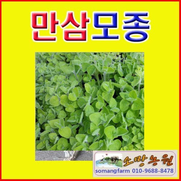 (O소망)야생화 만삼 모종(종근 뿌리) 20개