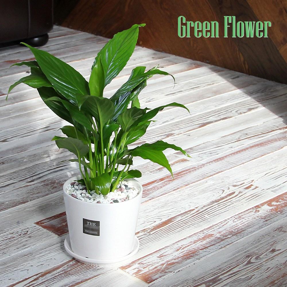 Green Flower 그린플라워 중형 화이트 도자기 화분 스파트필름