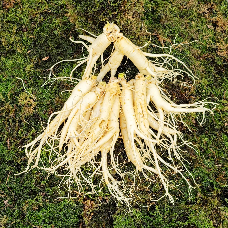 금산인삼 수삼 흠있는 난발삼 중 4~6년근 1채 750g 14~17뿌리 세척인삼, 1