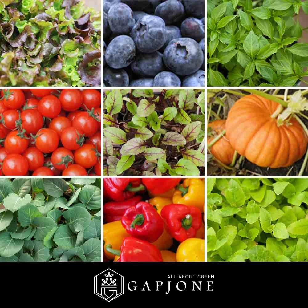 갑조네 텃밭모종 모음 베란다 텃밭 채소모종 고추모종 열매 채소 쌈채소 주말농장, C-13.고수모종(소)(3개)