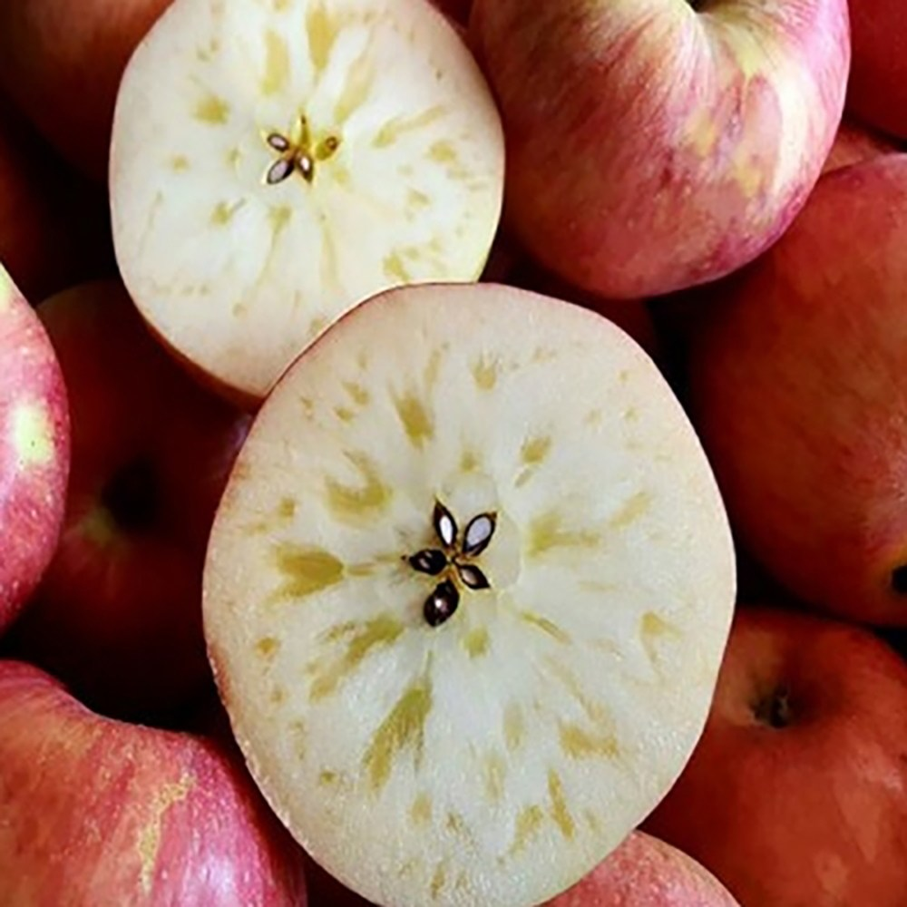 늘품 꿀맛 햇 홍로 사과 5kg 10kg, 꿀맛 햇 홍로 사과 중소과 5kg (19-21과)