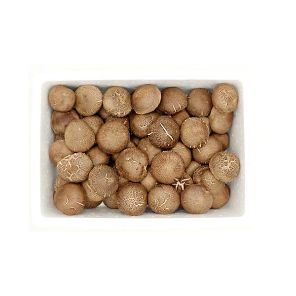 [남도장터][영암몰]기가찬 표고버섯 1kg 구이용 한입표고버섯
