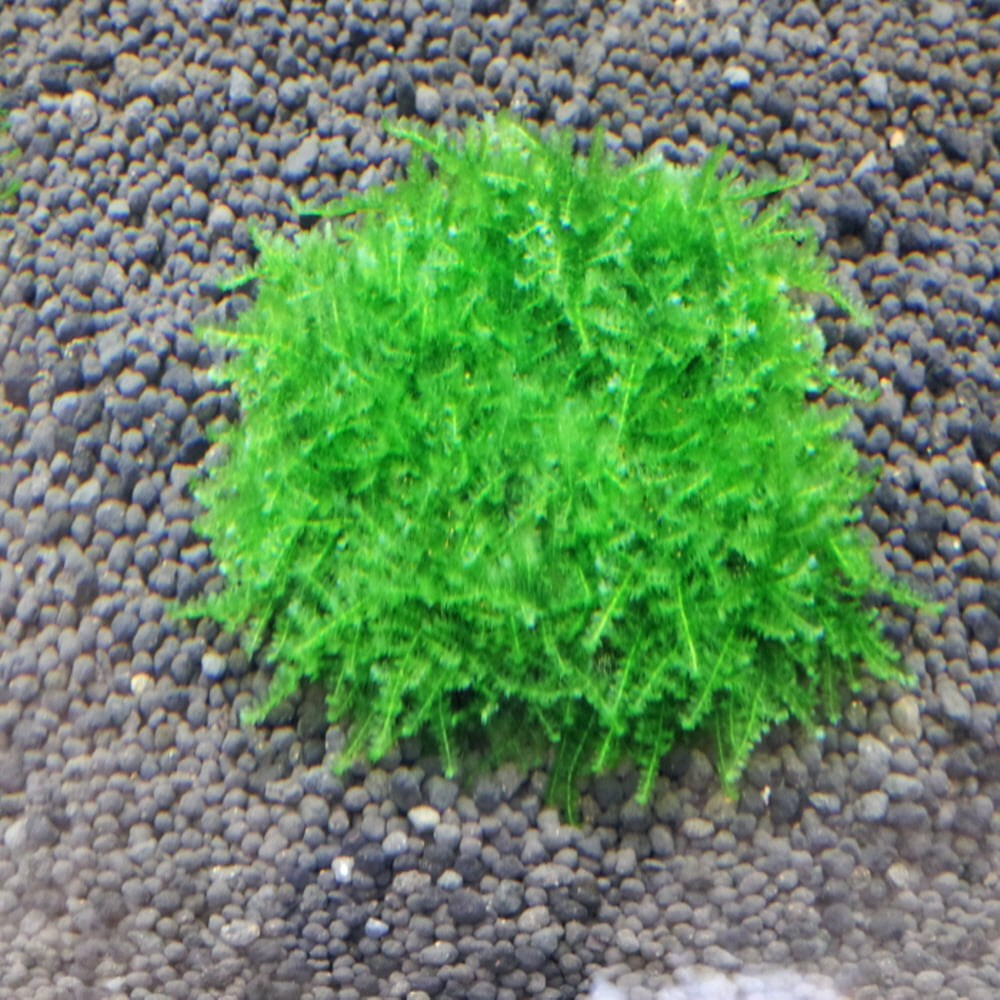 미니 삼각모스 활착타일(5cm*5cm), 단품