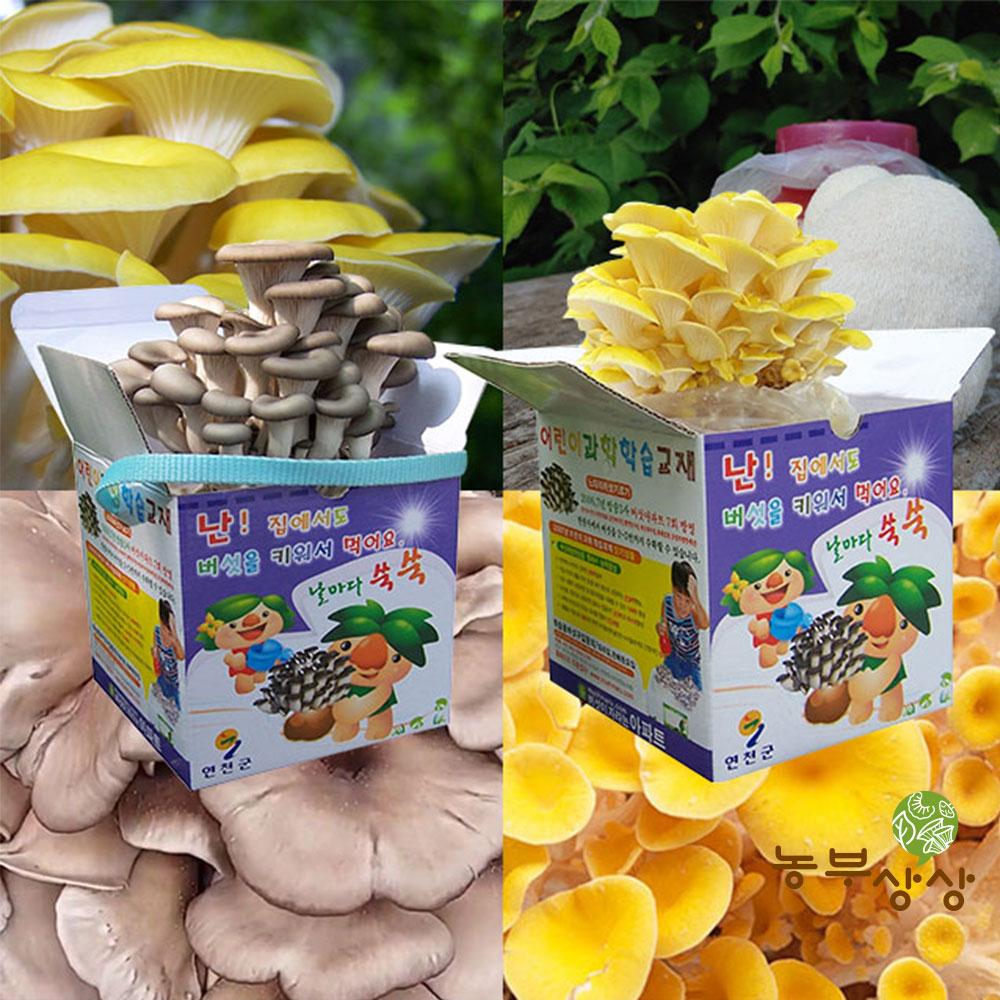 버섯종균 재배 버섯키우기 교육용 재배키트 느타리 노루궁뎅이, 흑색느타리버섯