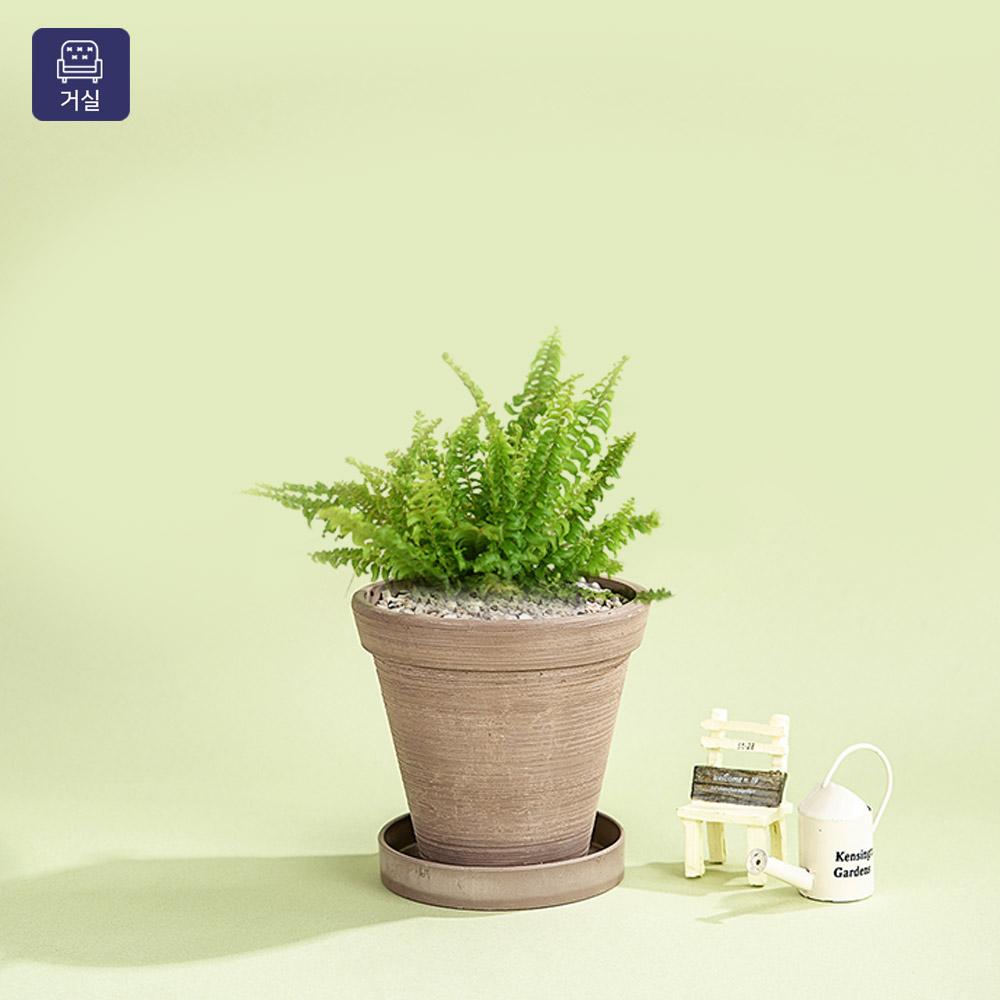 그린테라피 공기정화식물 에코 화분 빈티지 관엽식물, 보스턴고사리