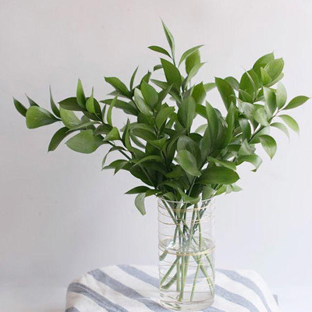 [천삼백케이] [디어먼트] 루스커스 잎 그린 인테리어 식물 생화, 단품