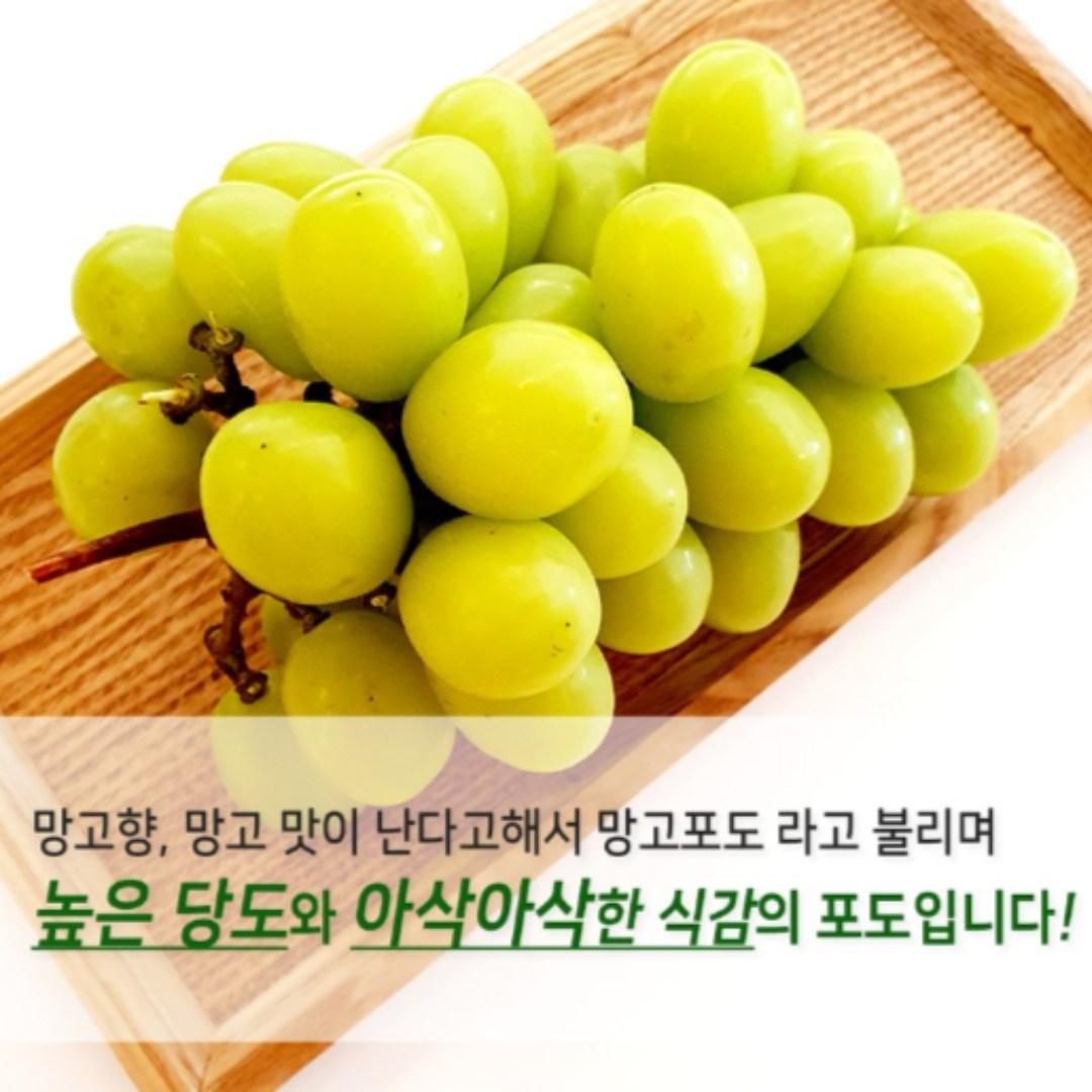 찐노마진몰 국내산 샤인머스켓 망고포도 씨없는포도 청포도, 1박스, 최상급 1kg
