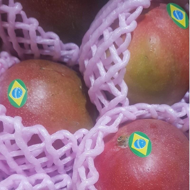 브라질 페루 고당도 애플망고, 1box, 애플망고 2kg(5-6과)