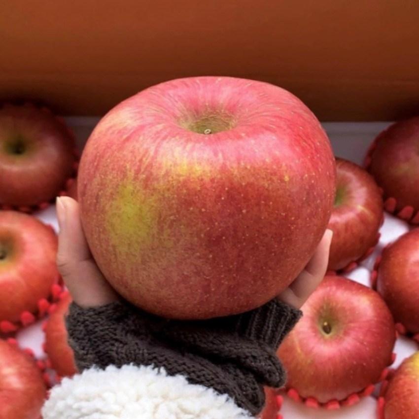 경북 청송사과 산지직송 아삭한 꿀사과 가정용 선물용 5kg 10kg, 1box, 5kg(가정용대과 10~13과)