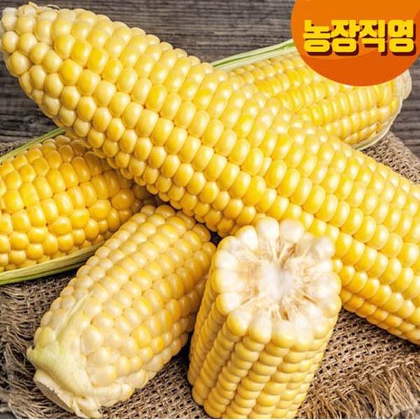 [8월중순수확발송] 면역력을 키워주는 신품종황금대학찰20개, 10개입, 꿀초당옥수수1박스
