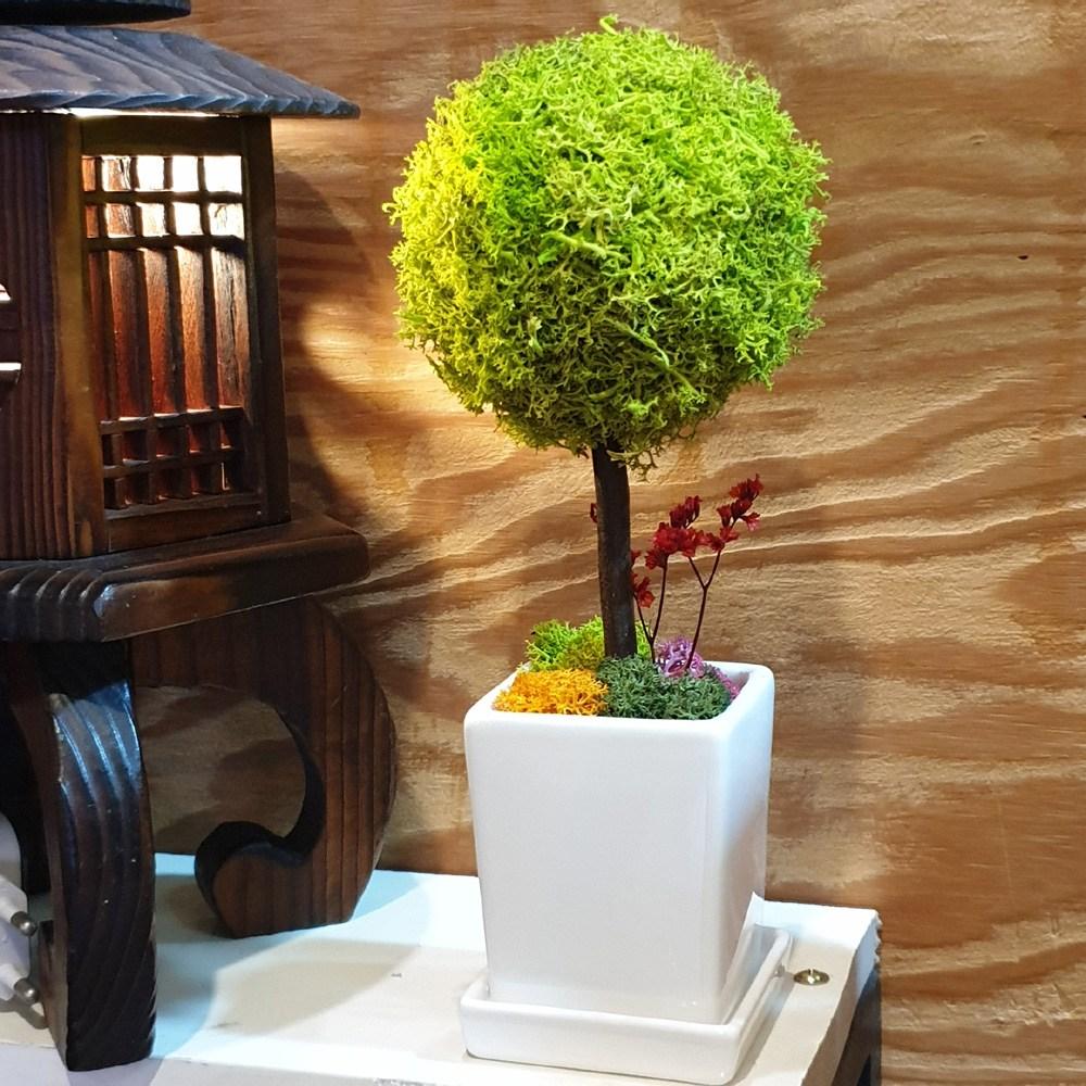 꽃을담은사진 스칸디아모스 토피어리 화분 천연이끼 공기정화식물, 스프링그린