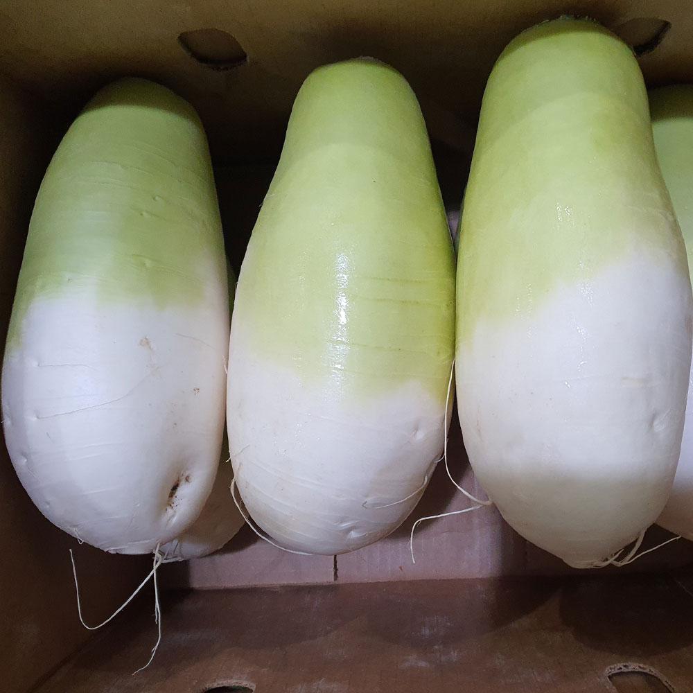 맛있는 제주월동무 세척 무우 7~14kg, 제주세척무우(4-6종)총7kg내외