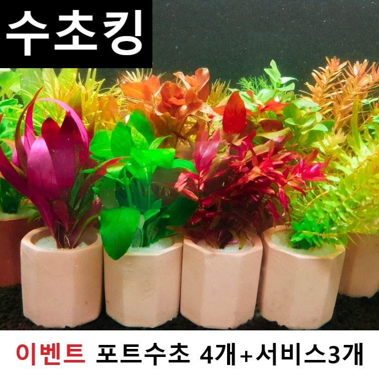 수초맛집 수초킹 키우기 쉬운 포트수초랜덤+서비스3개 (모스볼 마리모 부상초 비료 중 랜덤지급), 4개