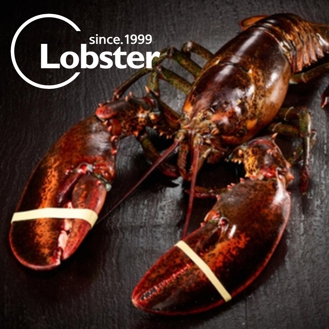 푸릇푸릇 활 랍스터 랍스타 바닷가재 버터구이 요리 용 lobster 캐나다 자숙랍스터 랍스터테일 500g 1kg, 활 랍스터 500g 1마리