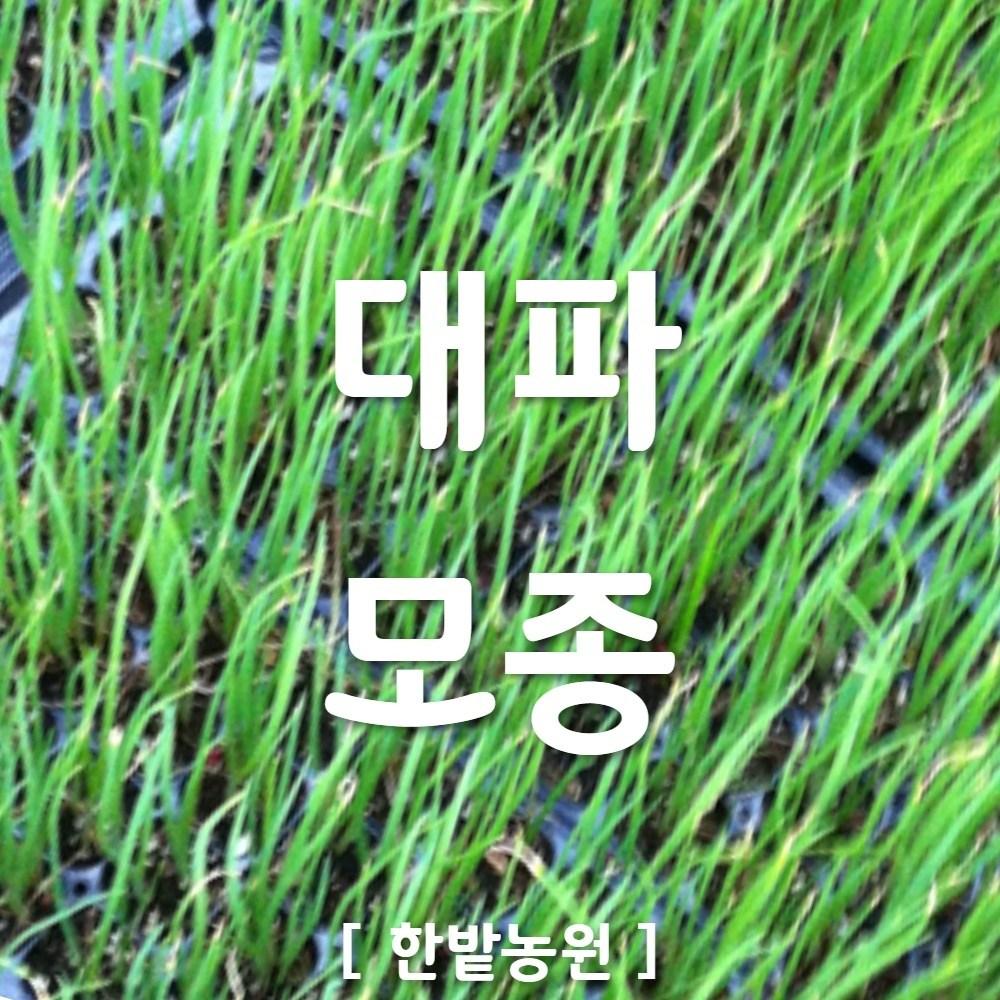 모종 추천 최저가 실시간 BEST