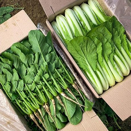 포천 싱싱팜 부드럽고 아삭한 어린 열무, 1개, 열무 2kg 얼갈이 2kg