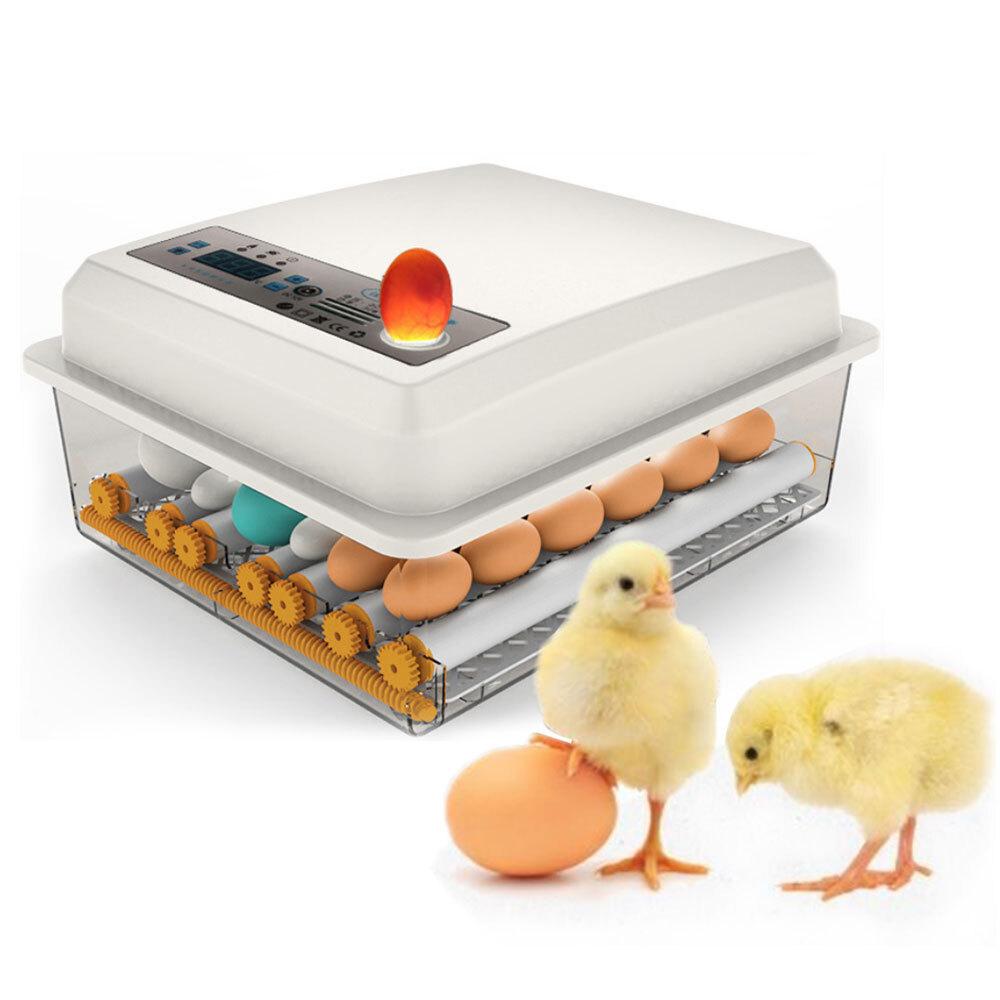 병아리부화기 계란 부화기 조류.온도조절 자동부화, 선택(1)계란부화기XWD16매ⓛCLH00790.01