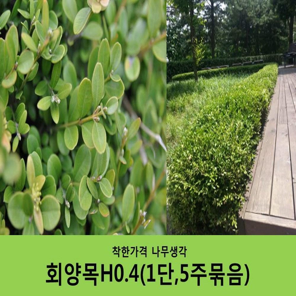 착한가격 나무생각 회양목H0.4 (1단5주묶음)
