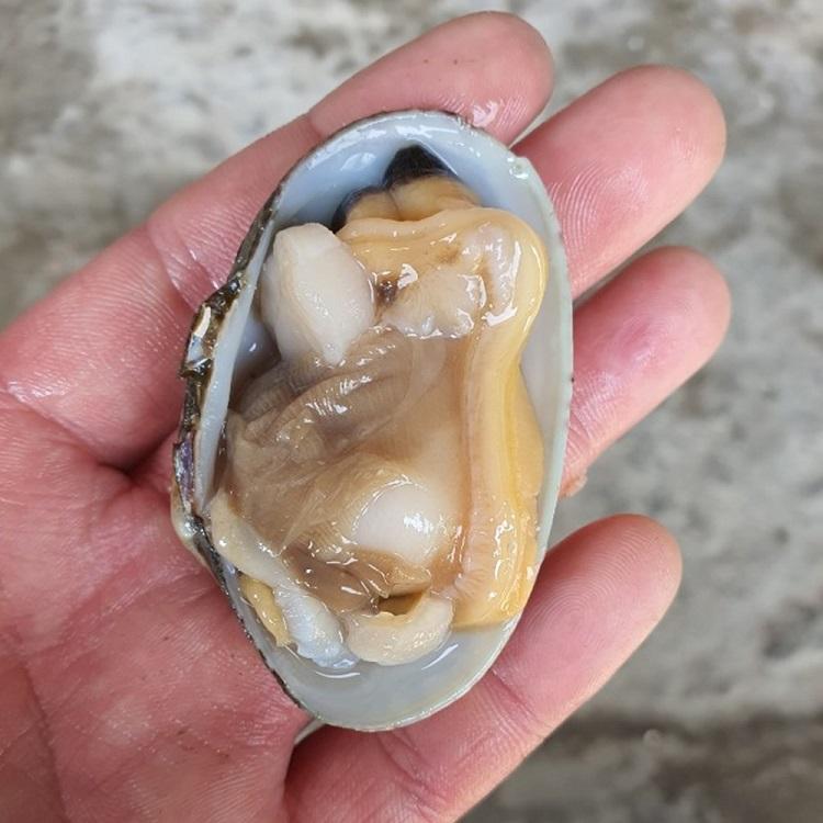 남해안자연산 왕깐바지락살500g 활바지락1kg, 남해안 자연산 바지락살 500g