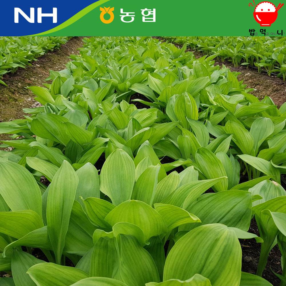 강원도 인제 잎 명이나물 (산마늘) 1kg(절임소스증정), 1박스