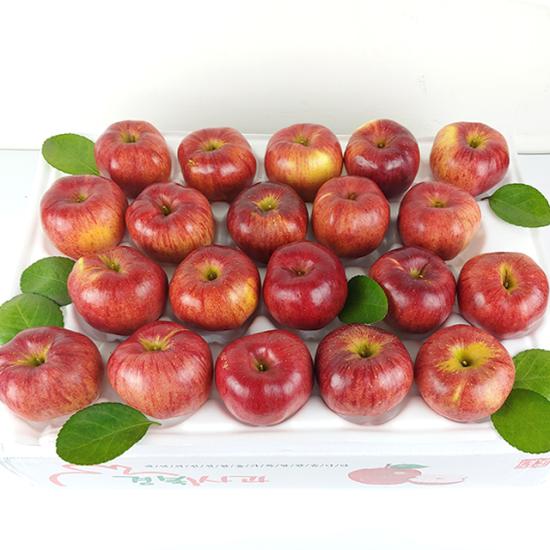[K쇼핑]경북 햇 홍로 사과 가정용 5kg 22-24과, 단일상품