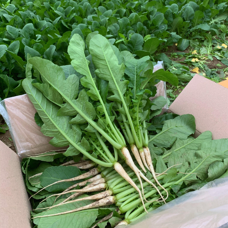 포천 싱싱팜 부드럽고 아삭한 어린 열무, 1개, 어린열무 2kg