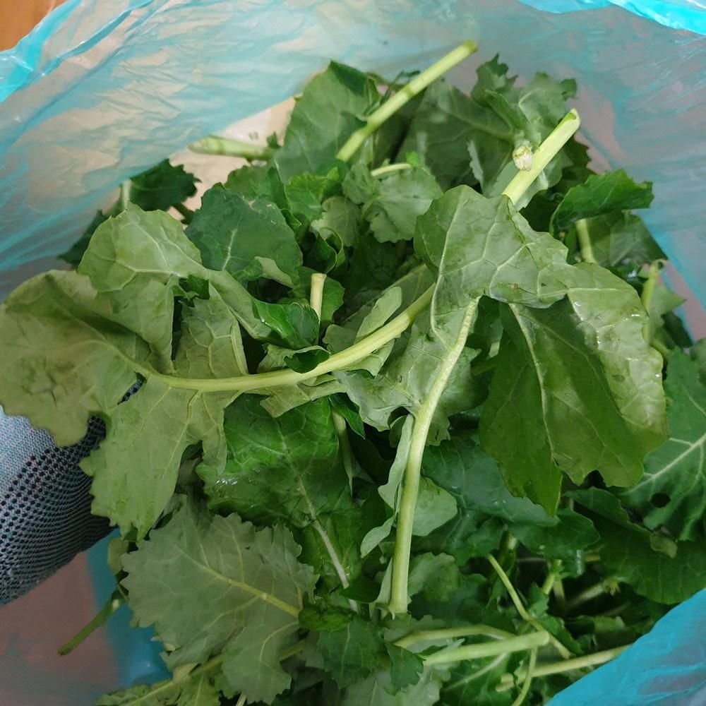 유채 나물 4kg내외 1관 생 겨울초 무침, 4kg