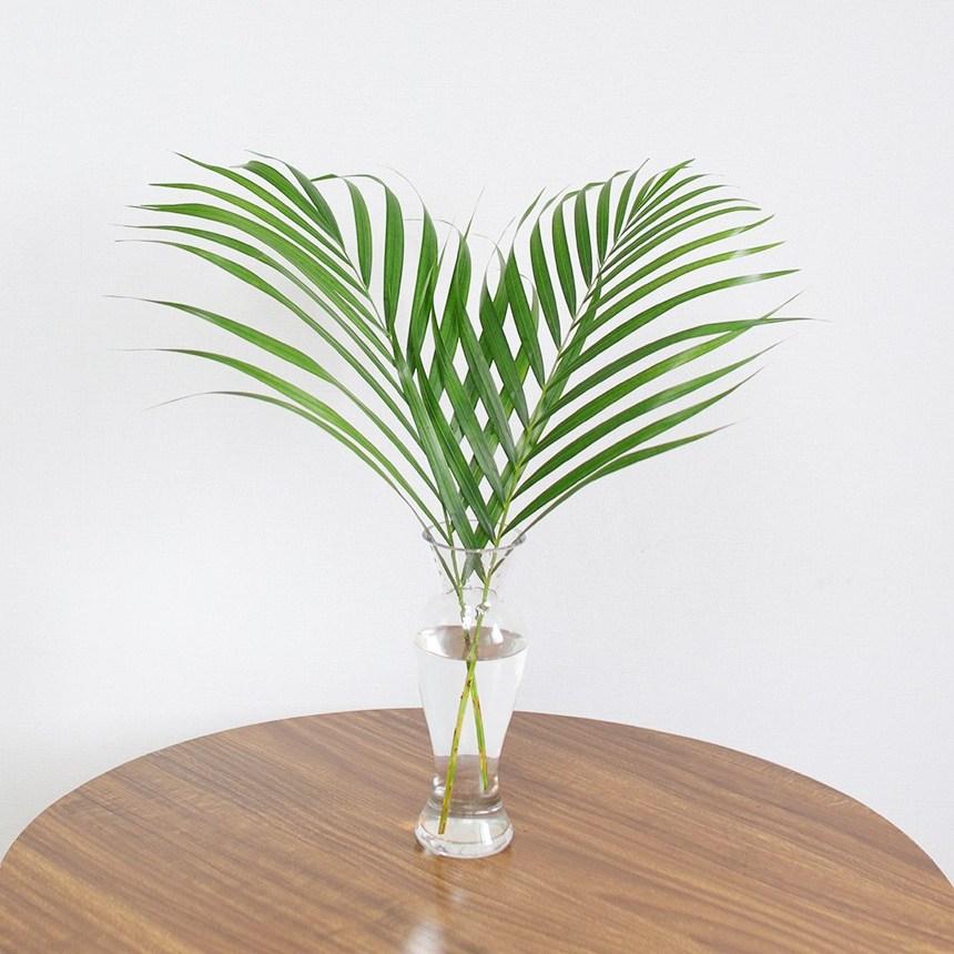 스위트피부티크 루스커스 몬스테라 야자수잎 엽란 그린테리어 수경식물, 야자수잎(1대/B타입)