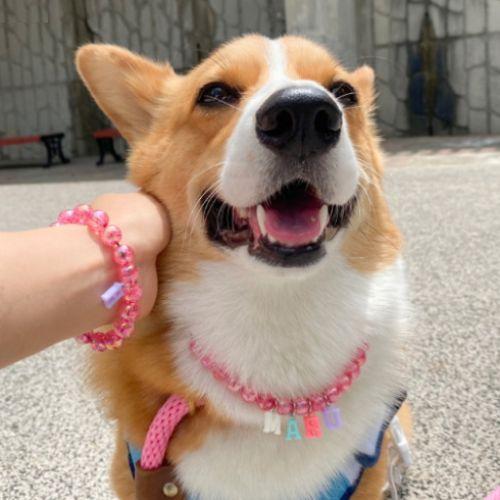 펫피투개더 강아지 유리 구슬 이니셜 비즈 목걸이 유기견후원, 화이트