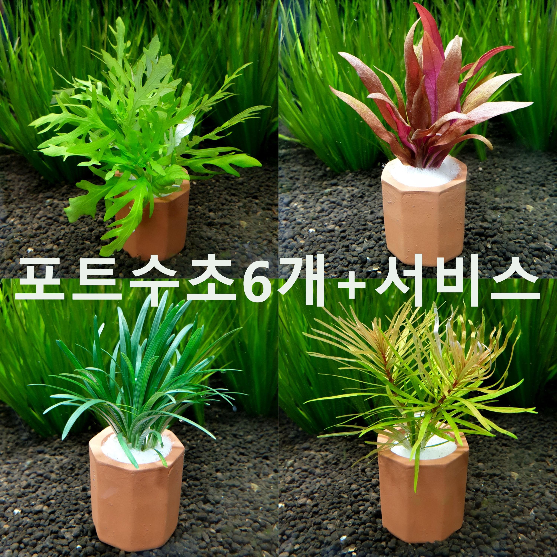 랜덤 포트수초 세트 6개 +서비스 초보자수초 자연수초 키우기 쉬운 수초