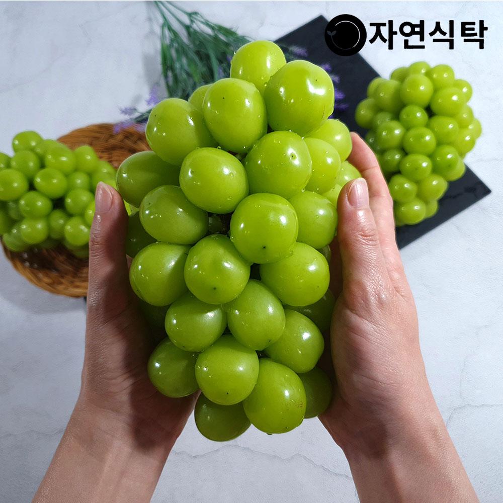 [자연식탁]국내산 망고포도 고당도 샤인머스켓 1.5kg (3~4송이), 단품