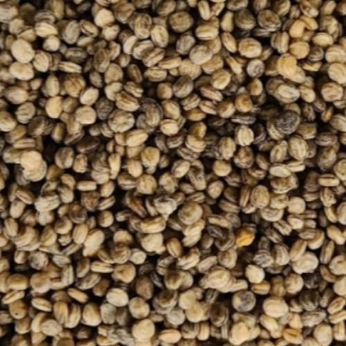 개갑 장뇌삼 인삼 씨앗 파종 산삼 산양삼 모종 묘삼 텃밭 재배, 100g